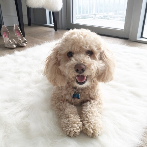 poodle-dog-sheepskin-rug-sparkly-heels-betsey-johnson